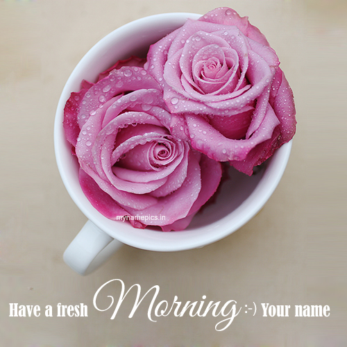 Write name on fresh morning rose profile pic